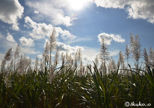 冬のさとうきび畑の上を流れる雲