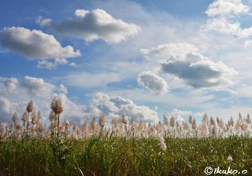冬のさとうきび畑と雲