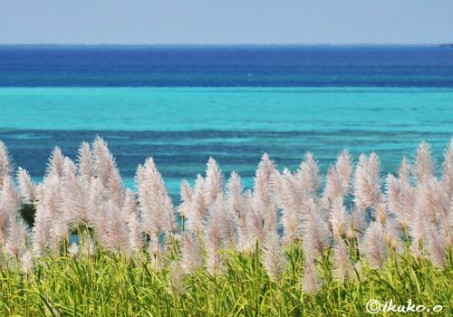 冬のさとうきび畑と青い海