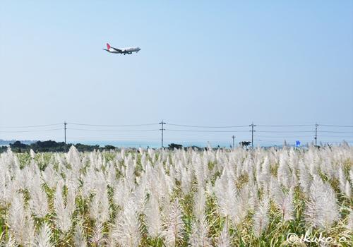 飛行機とサトウキビの穂