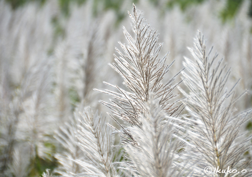 白銀の景色
