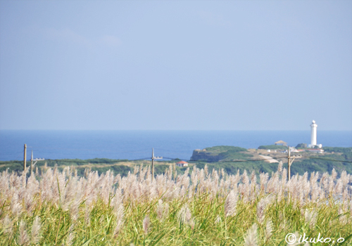 灯台とサトウキビの穂