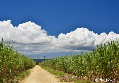サトウキビ畑を横切る雲