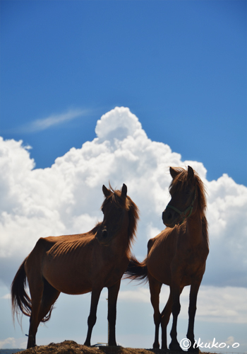 宮古馬と入道雲