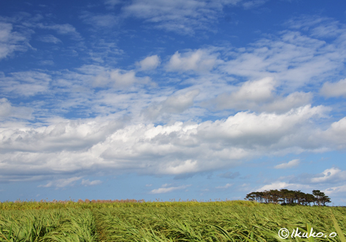 広大な畑と空