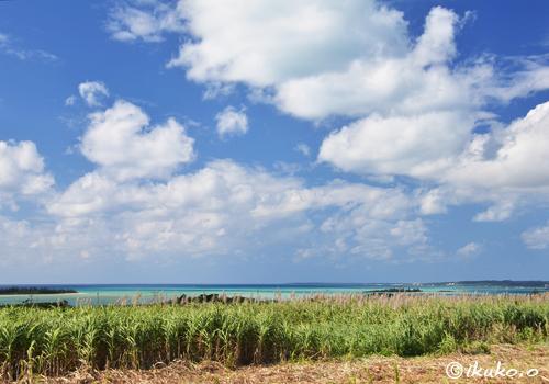 さとうきび畑と遠くに見える海
