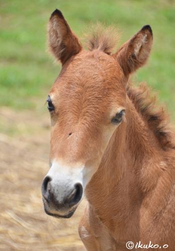 可愛らしい子馬