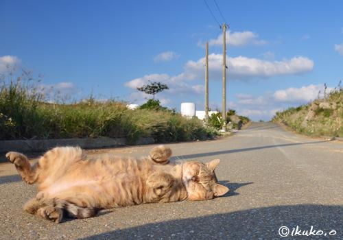 無防備すぎる島猫