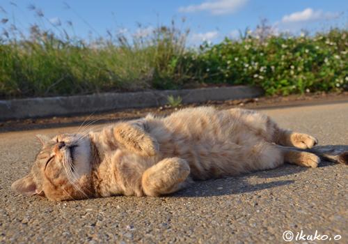 愛嬌たっぷりの島猫
