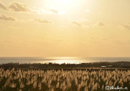 黄金色の海とサトウキビ畑