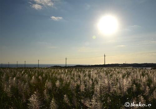 夕方のサトウキビ畑