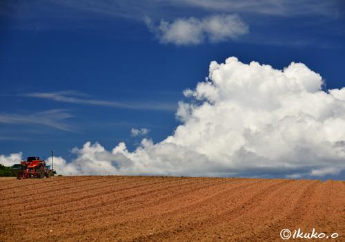 畑の上の入道雲