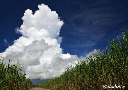さとうきび畑の上の入道雲