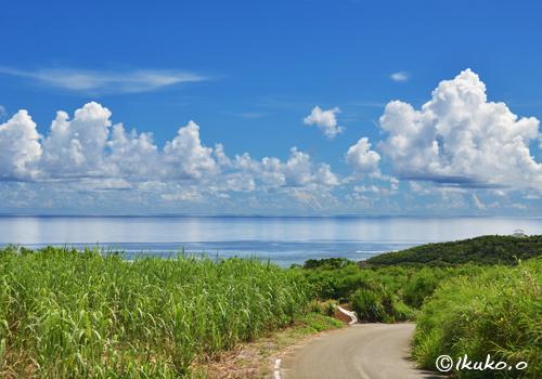 海とサトウキビ畑