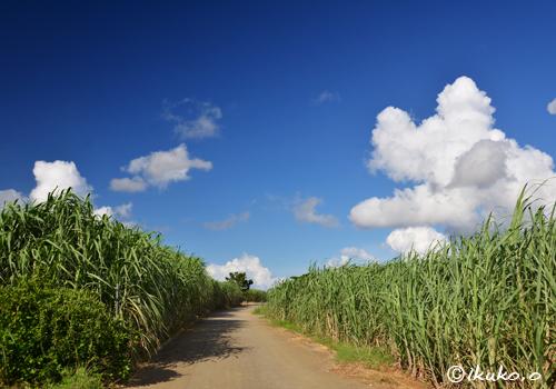 夏空とサトウキビ畑