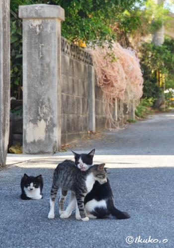 仲良しの島猫