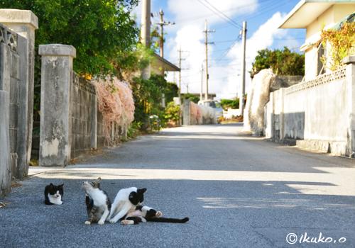 道路でくつろぐ島猫たち