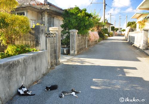 ぐだぐだする島猫たち