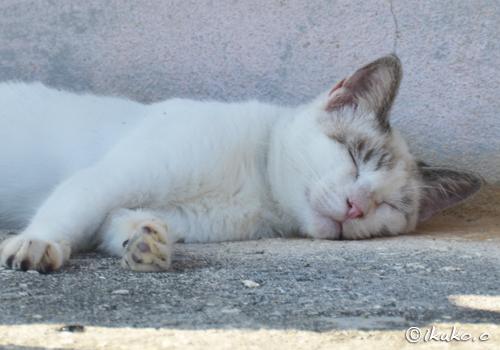 爆睡中の島猫