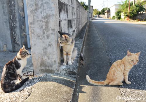 仲良しの島猫たち
