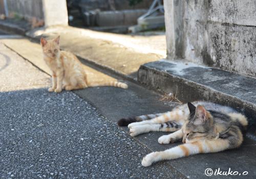 遊びたい子猫とお昼寝中の島猫