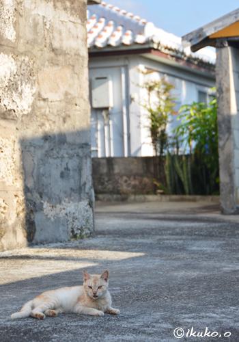 古い集落の島猫