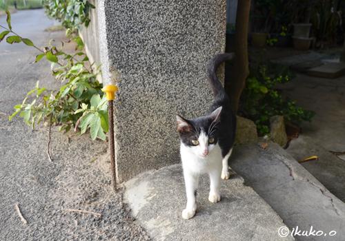 玄関からは出ない子猫