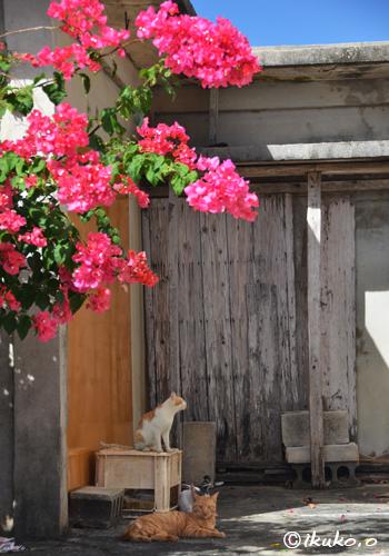 花の下でくつろぐ島猫