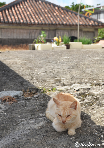 古民家と島猫