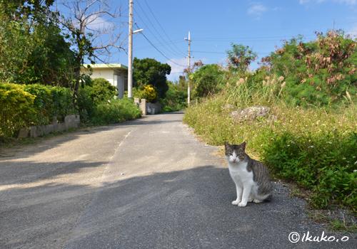 路地と島猫