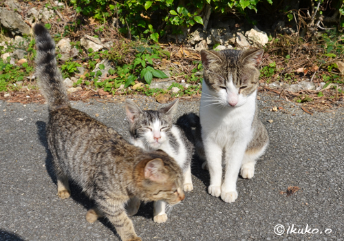 路地で出会った島猫たち