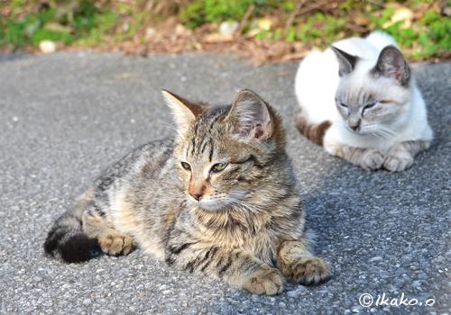路地でくつろぐ島猫