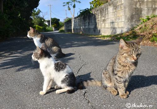 路地にたむろする島猫たち