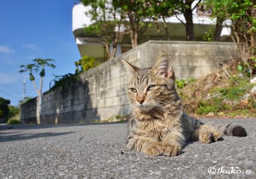 路地で出会った子猫