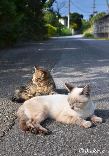 路地でくつろぐ島猫たち