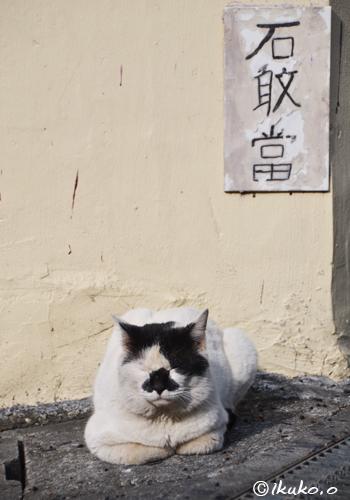 石敢當とブサカワな島猫