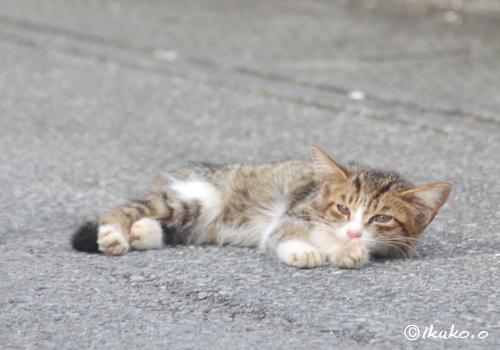 道路で寝そべる子猫