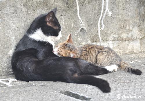 甘えん坊の子猫