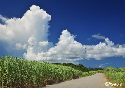 さとうきび畑を横切る雲