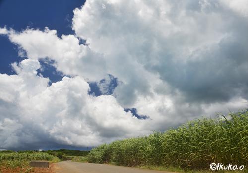 さとうきび畑を覆う雲