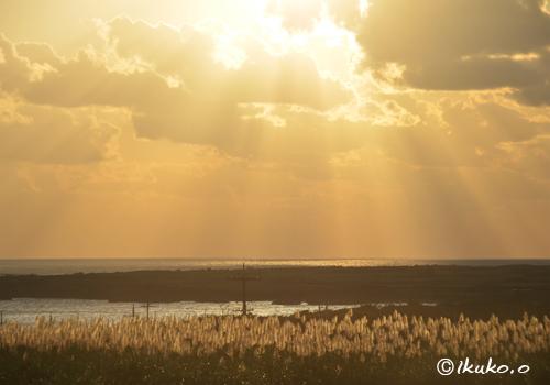 サトウキビ畑を照らす黄金色の光