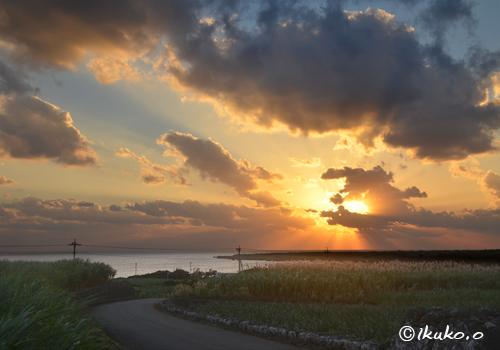 夕陽とサトウキビ畑
