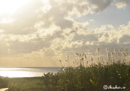 輝く海とさとうきびの穂