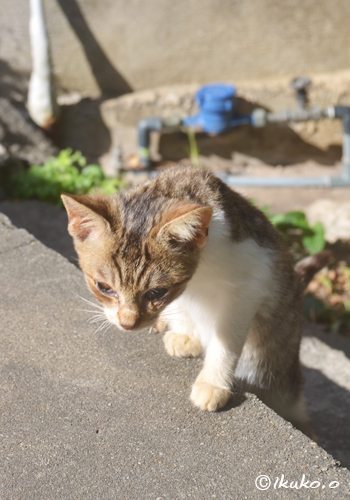 じわじわと近づく子猫