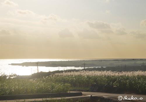 輝くさとうきび畑と海