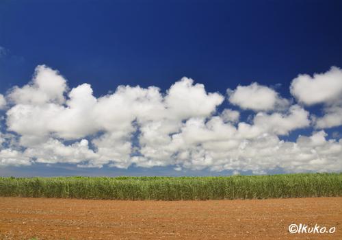 さとうきび畑の上に浮かぶ雲