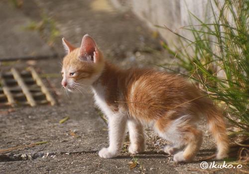 子猫の冒険