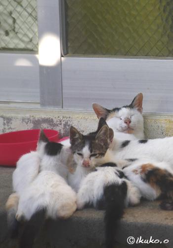 爆睡中のお母さん猫