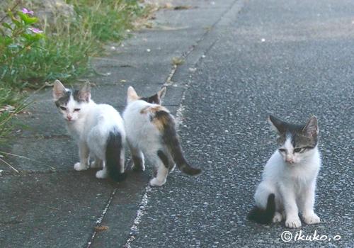 子猫の三兄弟