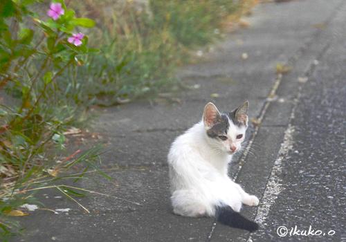 島猫の子猫